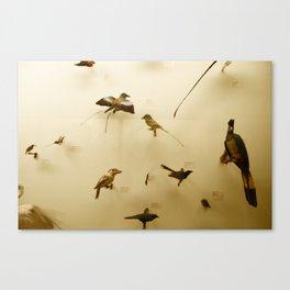 Birds of Glory Canvas Print