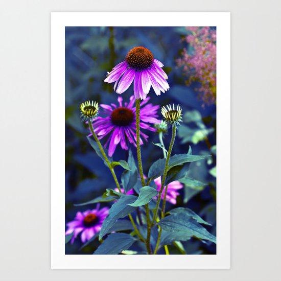 Purple Coneflowers  Art Print