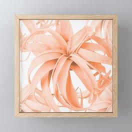Coral Color Air Plant White Background #decor #society6 #buyart Framed Mini Art Print