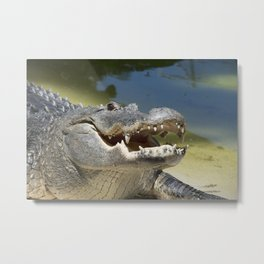 Alligator Smile Metal Print