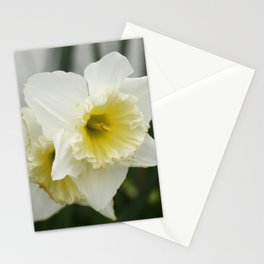 White and yellow daffodils, early spring flowers Stationery Cards