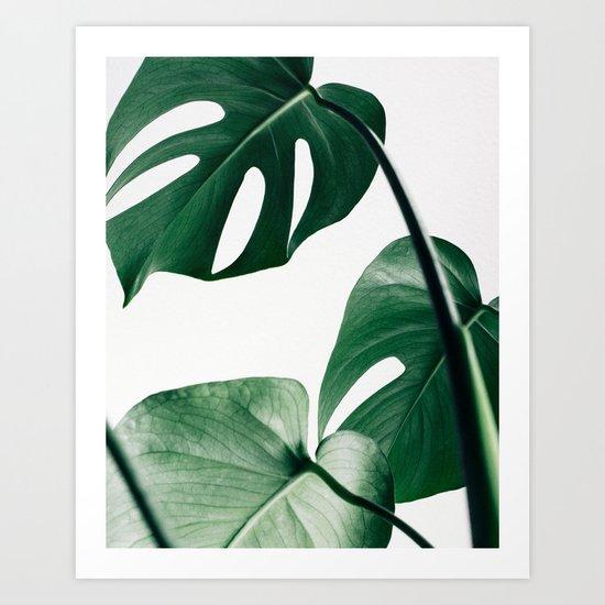 Plant, Green, Monstera, Leaf, Minimal, Trendy decor, Interior, Wall art, Photo by scandihome