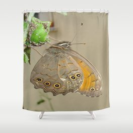 Meadow Brown Butterfly Feeding On Aphids Shower Curtain
