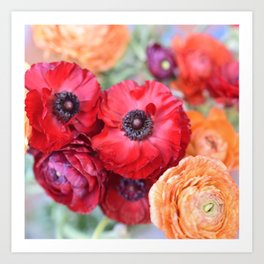 Rosey Ranunculus Art Print