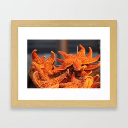 Night Market Starfish  Framed Art Print