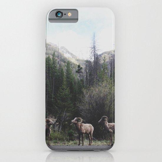 Bighorn Sheep iPhone & iPod Case