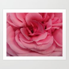 Delicate Rose Art Print