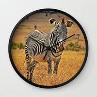 zebra Wall Clocks featuring Zebra by minx267
