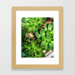 3 Succulents Framed Art Print