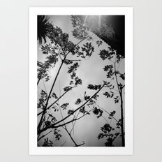 leaves, wall and shadows Art Print