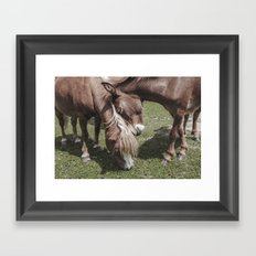Pony and Baby Horse | Farmwife Framed Art Print