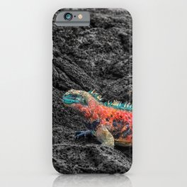 Christmas Iguana in the Galapagos iPhone Case