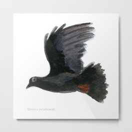 Black Imperial Pigeon Metal Print