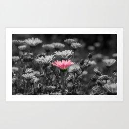 Dash of Pink Art Print