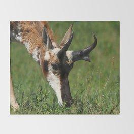 Pronghorn Antelope Portrait Throw Blanket