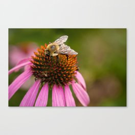Bee Macro Canvas Print