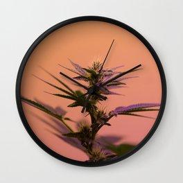 Macro cannabis kush photo Wall Clock