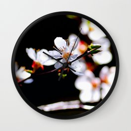 White Japanese Apricot Flowers Against The Black Background Wall Clock