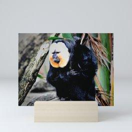 White faced saki monkey Mini Art Print