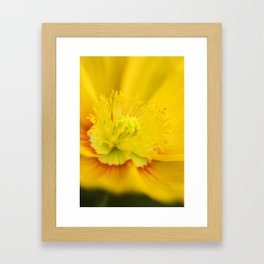 Iceland Poppy Close Perspective Framed Art Print