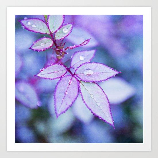 Lilac Rim Art Print