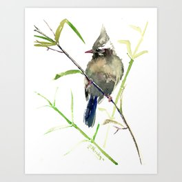 Yuhina Bird Art Print
