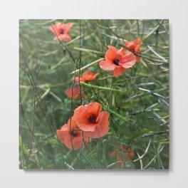 RED POPPY FLOWERS - Isle Ruegen Metal Print