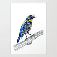 Bird Inspiration: Tickell's Blue Flycatcher Art Print