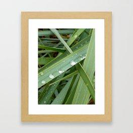 Grass and Rain Framed Art Print
