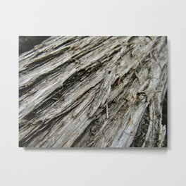 Bark on a Downed Tree Metal Print