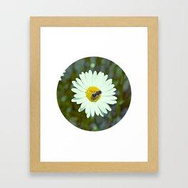 We Bee Chillin Framed Art Print