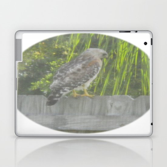 Falcon gazing Laptop & iPad Skin