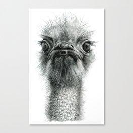 Arrogant Ostrich SK100 Canvas Print