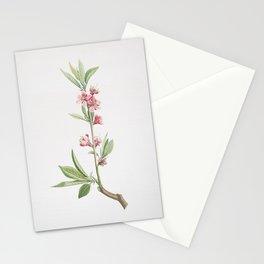 Vintage Pink Flower Branch Illustration Stationery Cards