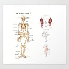 Human Skeleton Poster Art Print