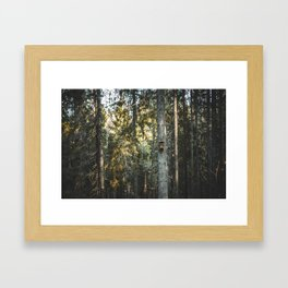 Latvian Forest || Spring time || Bird Cage || MadaraTravels Into The Wild. Framed Art Print