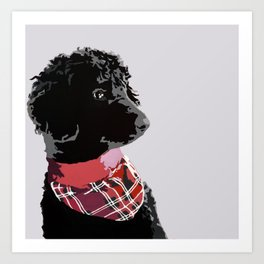 Black Standard Poodle in Grey and Red Art Print