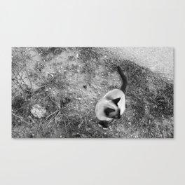 The Cat Canvas Print