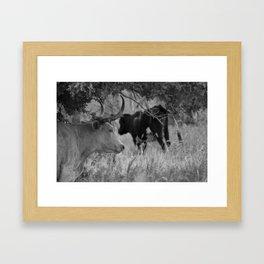Oklahoma's Wild Longhorn // Black and White Framed Art Print