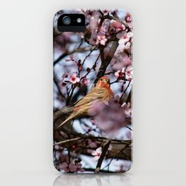 Spring Blossoms - Male House Finch iPhone Case