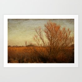 Orange winter Art Print