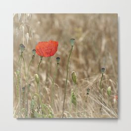 Happy poppy Metal Print
