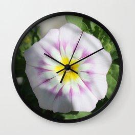 White Dwarf Morning Glory Convolvolus tricolor Wall Clock