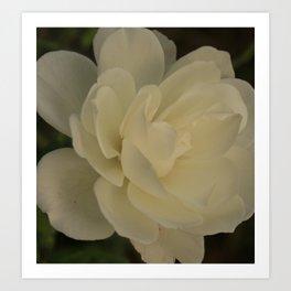 White Rose side Art Print