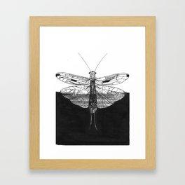 Hybrid plecoptera Framed Art Print