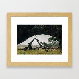 Fanal Pond, Madeira Framed Art Print