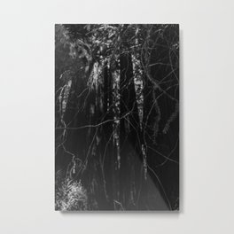 Redwood Forest XIII Metal Print
