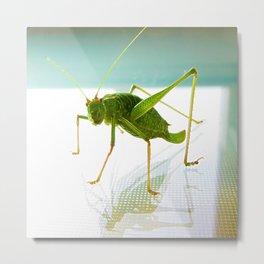 Happy Grasshopper Metal Print