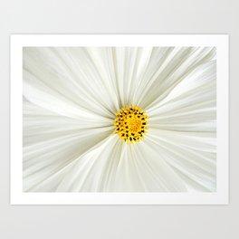 Cosmos Flower Core Art Print