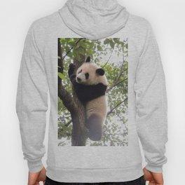 Chongqing Baby Giant Panda | Bébé Panda géant Hoody